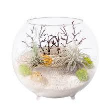 aliexpress com buy air plant terrarium marimo moss container
