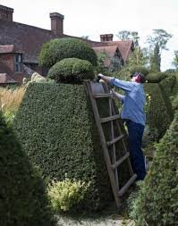 Yew Topiary - free images tree grass lawn flower backyard garden uk