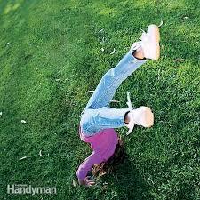 lawn and yard maintenance and gardening tips u2014 the family handyman