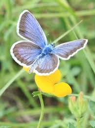 flower and butterfly images free stock photos 11 739 free