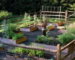 raised bed vegetable garden layout houzz
