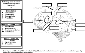 Anatomy And Physiology Labeling Label The Brain Anatomy Diagram Brain Anatomy Labeling Human