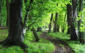 forest green nature path trees forests desktop wallpaper free