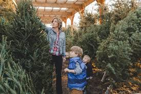 the holiday acres christmas tree farm in manvel home facebook