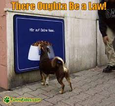 Law Dog Meme - there oughta be a law