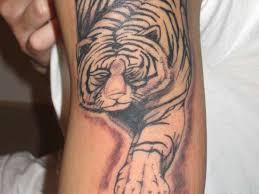 white tiger ideas rochester ny design idea for and