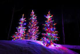 multi colored christmas trees christmas lights decoration