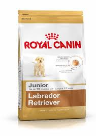 labrador retriever junior dog food royal canin