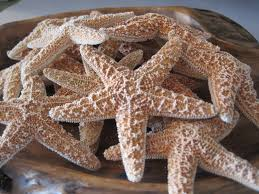 Starfish Home Decor Small Sugar Starfish 2 3