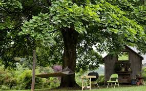the benefits of shade trees nature s sunscreen naturally healthy