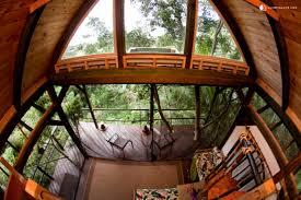 tree house in hawaii