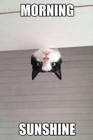Good Morning Cat Meme - good morning cat dump a day