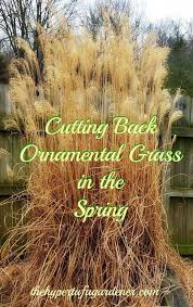 trimming ornamental grasses a bungee cord happiness
