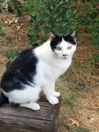 Blind Cat Sanctuary Sanctuary Buddies Place Cat Rescue Of Texas
