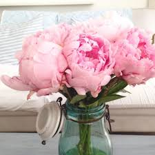 i buy them all the time peonies pivoines pinkflowers