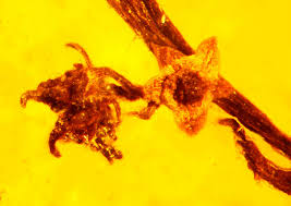 Reproduction In Flowering Plants - amber fossil reveals ancient reproduction in flowering plants