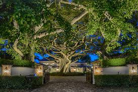 king innovation lighting historic trees