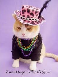 Fat Tuesday Meme - celebration fat cats on fat tuesday life with cats