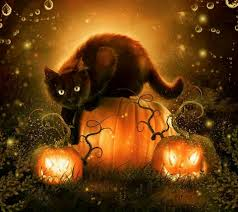 happy halloween lights cat exploring the lights now just what is this all about fun