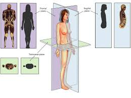 think science anatomical position directional terms planes