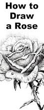 learn to draw a rose with this pen and ink drawing lesson free