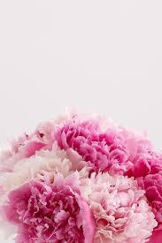 Peonies Season Spotlight On Peonies Limited Edition Blooms Proflowers Blog