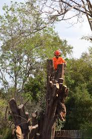 tree removal ryde at your tree service