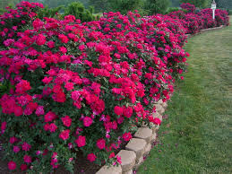 Flower Bed Border Ideas Flower Bed Border Plants