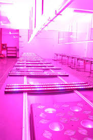 bset sale apollo 200w 1600w uv led panel grow light 3w 5w led