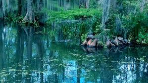 Louisiana lakes images Cypress lake lafayette louisiana wikipedia jpg