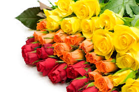 colorful roses bouquet of colorful roses stock photo image of affection 7860990