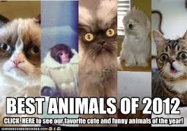 Colonel Meow Memes - i can has cheezburger 2012 funny animals online cheezburger