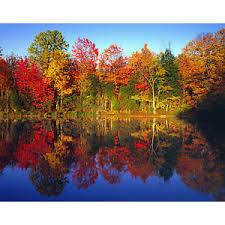 pretty fall trees polyvore
