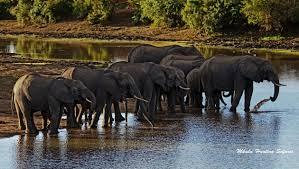 african safari animals south african hunting safari prices 2018 mkulu african hunting
