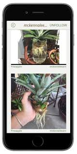best 20 herb planters ideas on pinterest growing herbs 20 best micro greens images on pinterest gardening grow your own