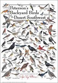 Florida Backyard Birds - birds of southwest florida birds of prey