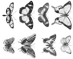 victorian butterfly line art illustrations digital collage sheet