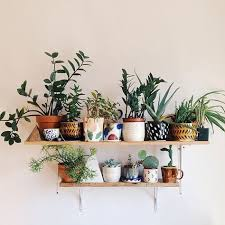 Indoor Planter Pots by Best 20 Indoor Planters Ideas On Pinterest U2014no Signup Required