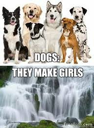 Wet Girl Meme - meme made it wet dog made best of the funny meme