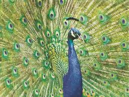 pumpernickel press wildlife cards beautiful peacock sculpted embossed blank 9 boxed note cards and