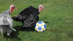 season thanksgiving turkey 3 reasons to give thanks for soccer the18