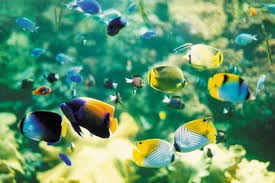 hcm city ornamental fish exports bring home 7 million usd