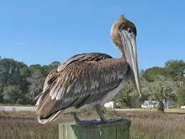 Florida wildlife images Florida fish and wildlife conservation commission wlrn jpg