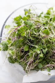 57 best microgreens images on pinterest indoor gardening