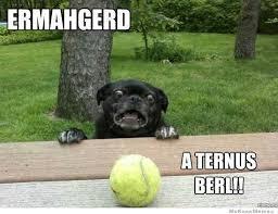 Cool Dog Meme - pin by lily ann on random pinterest random