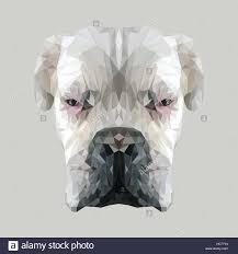 boxer dog white white albino boxer dog low poly design triangle vector