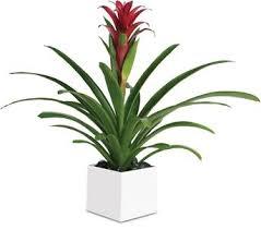 Indoor Flower Plants Order Online Indoor Plants As Gifts With Online Delivery Indoor