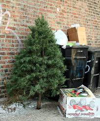 chicago christmas tree recycling 2012 chicago garden
