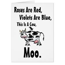Cow Birthday Card Funny Cow Poem Birthday Card Zazzle Com