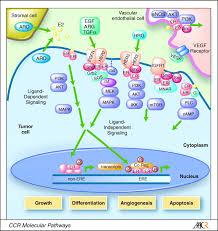 membrane associated estrogen receptor signaling pathways in human